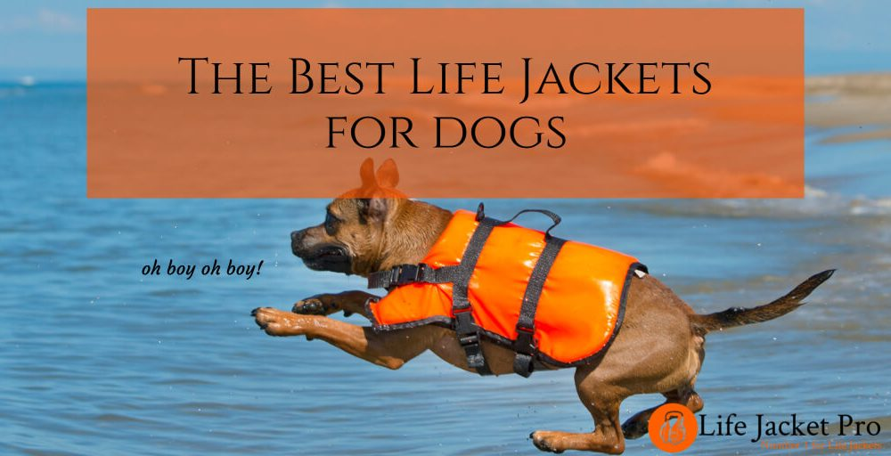 The 5 Best Life Jackets for Dogs